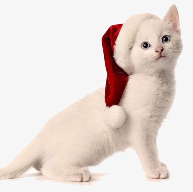 Christmas Cat PNG, Clipart, Cat Clipart, Chong, Christmas.