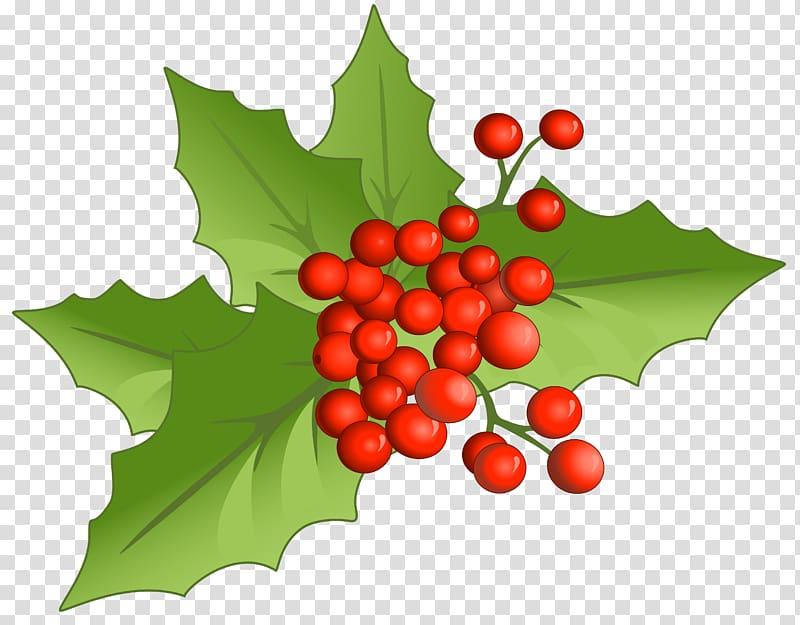 Mistletoe graphic art, Holly Aquifoliales Natural foods Fruit.