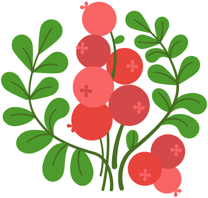 Cranberry clipart. Free download..
