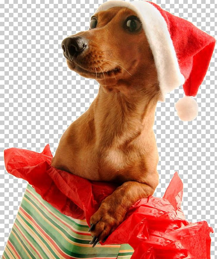 Dachshund Santa Claus Pug Puppy Christmas Day PNG, Clipart.