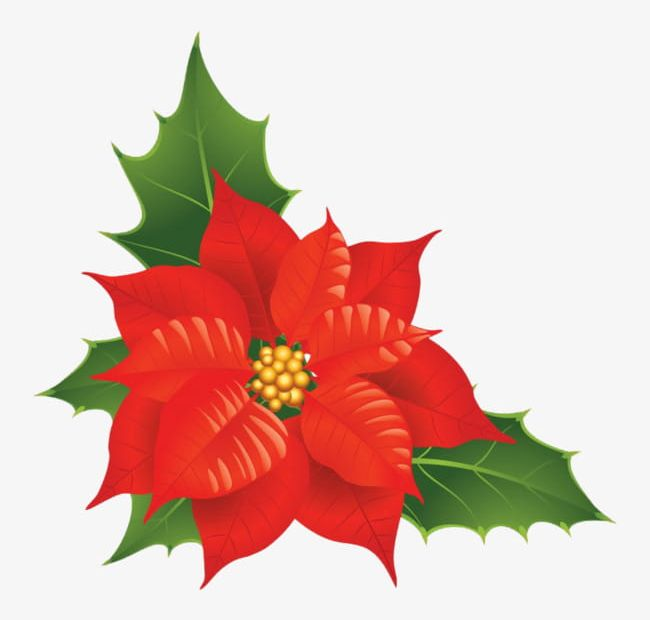 Beautiful Christmas Flower PNG, Clipart, Beautiful Clipart.