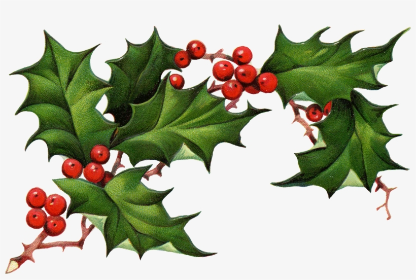 Free Download Christmas Ivy Clipart.