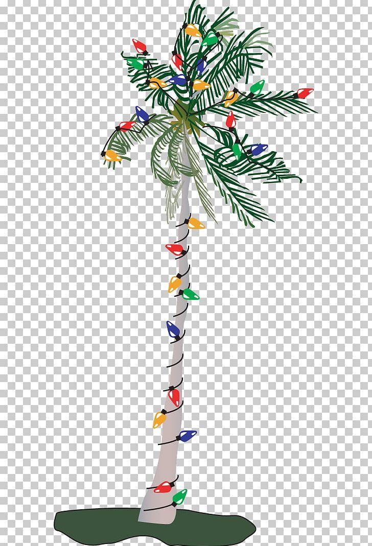 Adonidia Christmas Tree PNG, Clipart, Adonidia, Arecaceae.