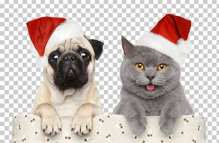 Cat Dog Santa Claus Christmas Pet PNG, Clipart, Carnivoran, Cat, Cat.