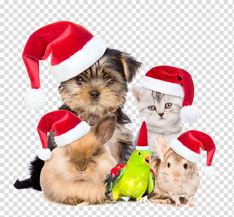 Pets are also buckle creative Christmas HD Free transparent.