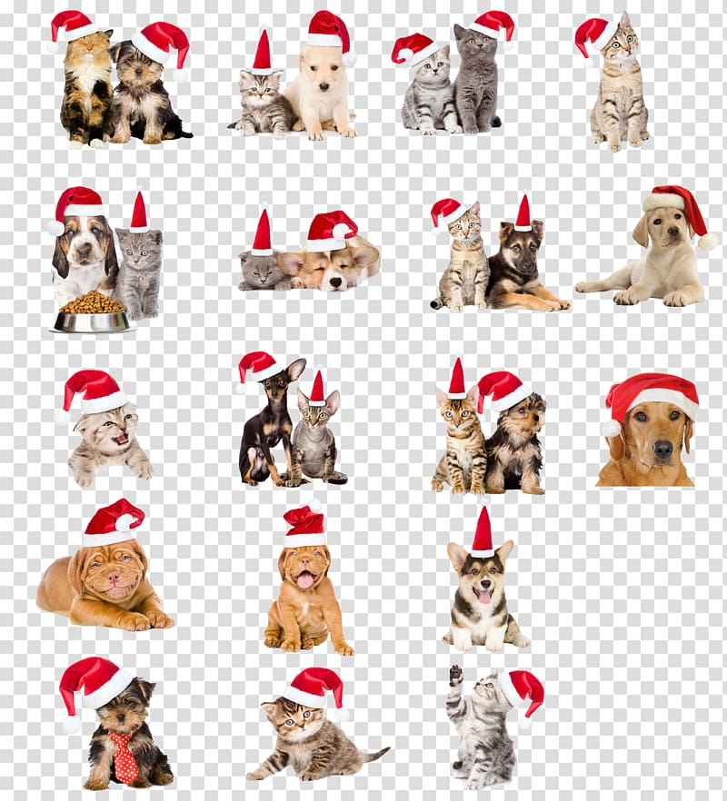 Christmas hats pet dogs and cats transparent background PNG.
