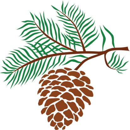 Pine Cone Clip Art, Vector Images & Illustrations.
