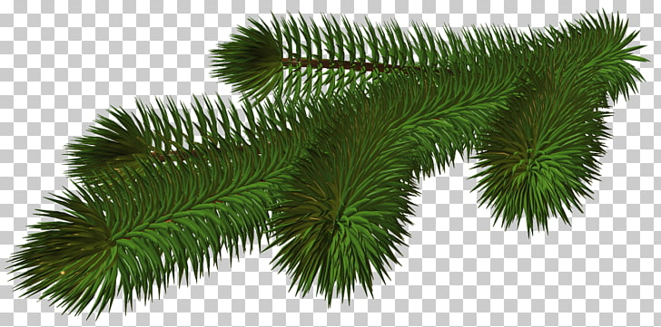 Branch Christmas tree , pine cone PNG clipart.