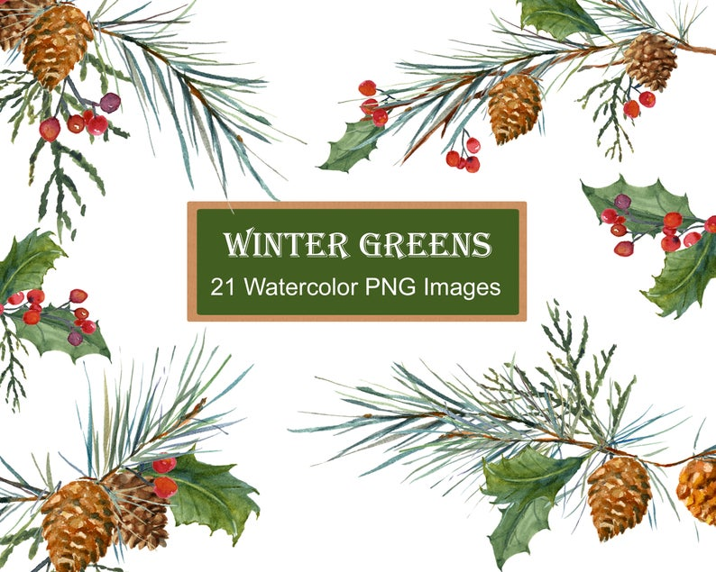 Winter Greenery Clip Art, Pine Clipart, Christmas Greens, Leaves, Berries,  Holly, Pine cones, Pines, Watercolor Clipart DIY Christmas Cards.