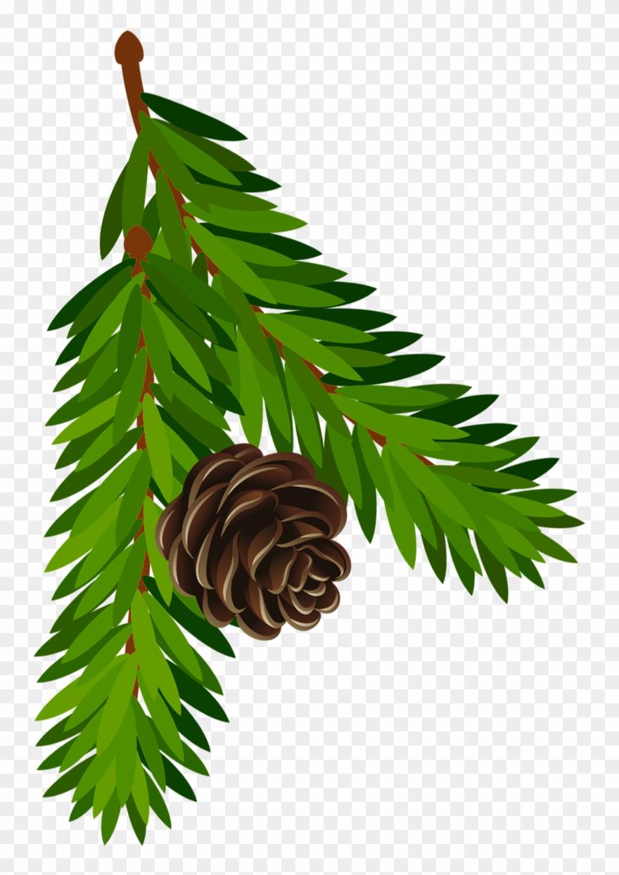 Transparent Clip Art Pine Cone Png (#238736).
