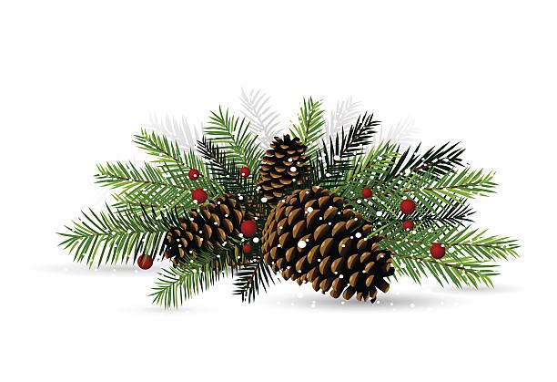 Best Pine Cones Illustrations, Royalty.