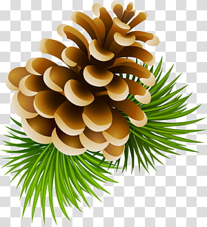 5,247 conifers PNG clipart images free download.