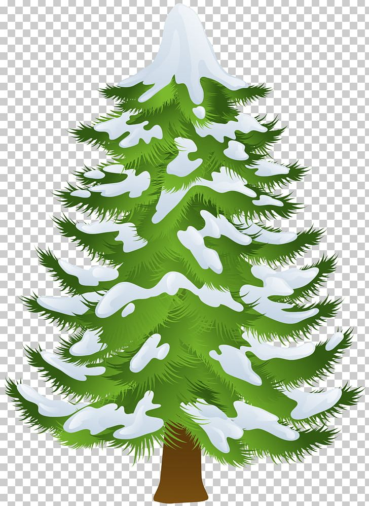 Pine Tree Winter PNG, Clipart, Branch, Christmas Decoration.