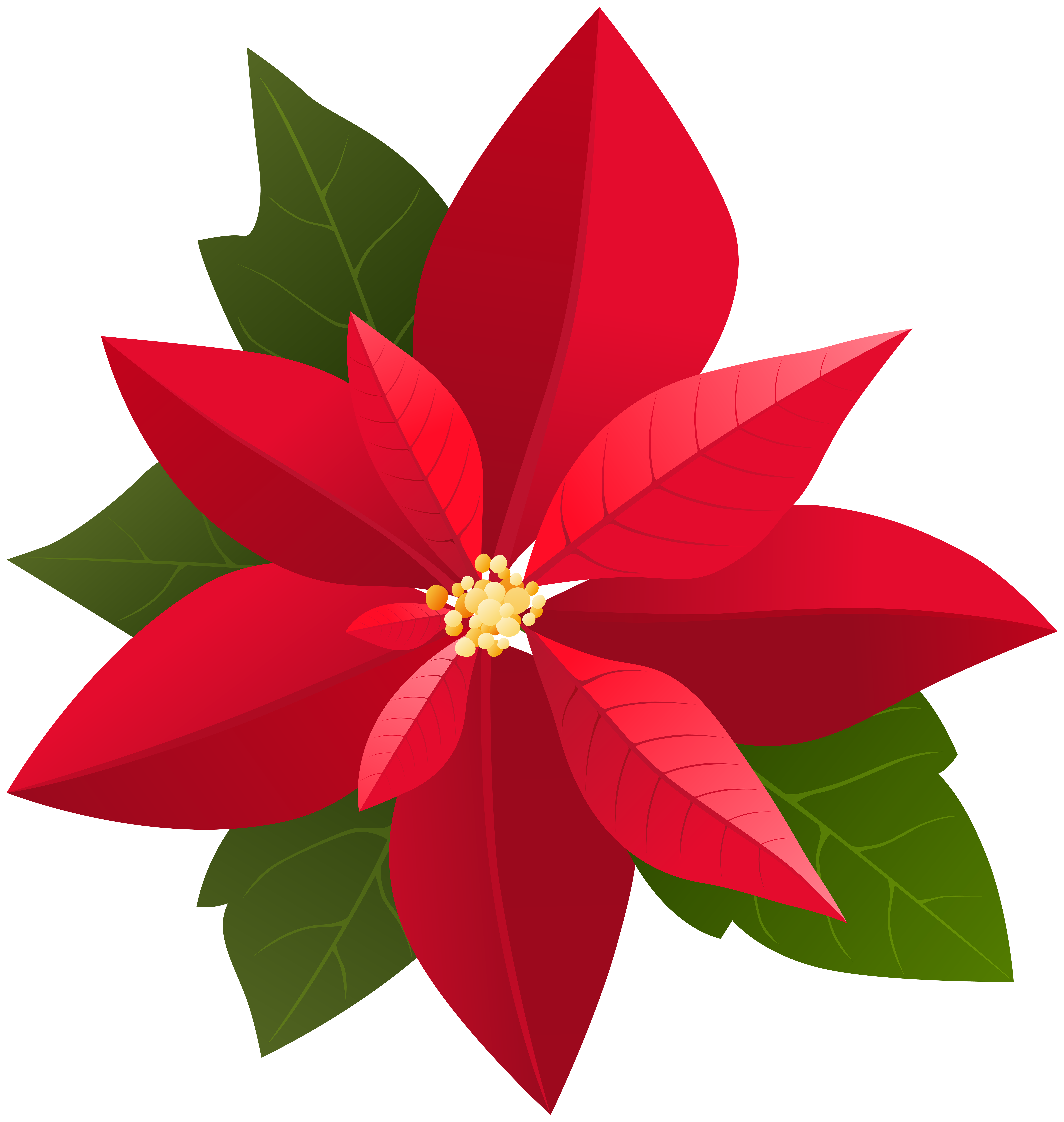 Christmas Poinsettia PNG Clip Art.