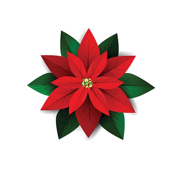 Christmas poinsettias clipart clipground