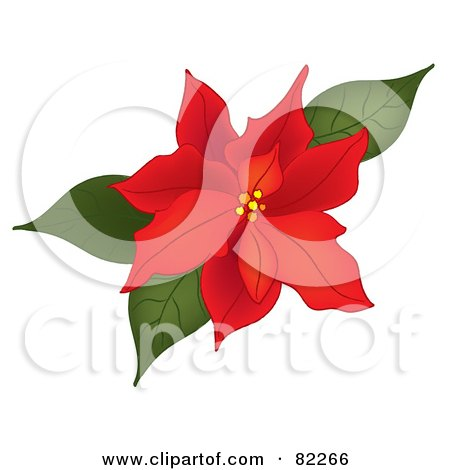 Beautiful Red Blooms On A Christmas Poinsettia Plant Clipart.