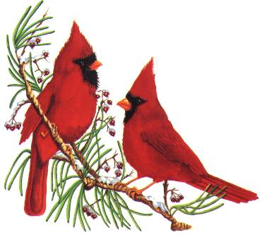 Cardinal clipart branch clipart, Cardinal branch Transparent.