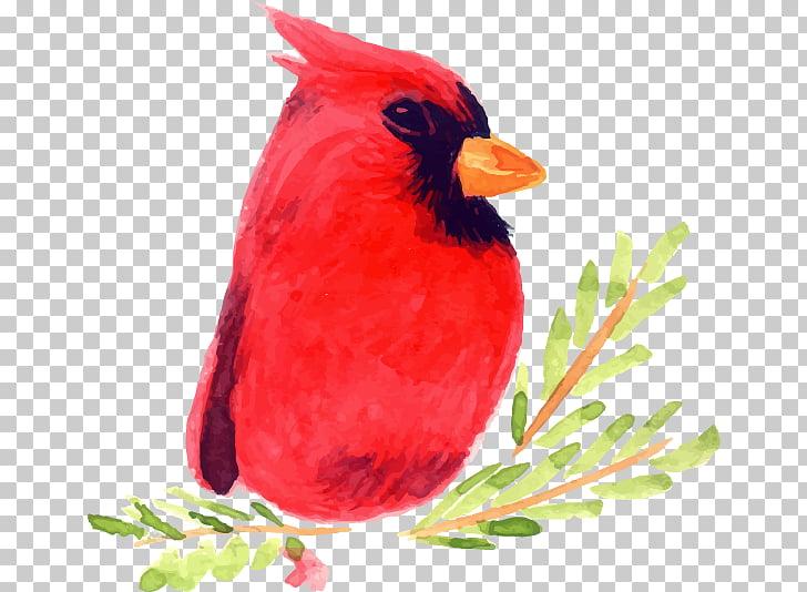 Bird Watercolor painting Illustration, Hand.
