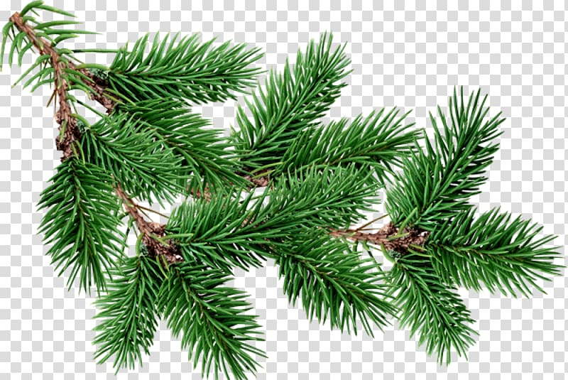 Green tinsel, Fir Pine Tree , free christmas tree branches buckle.