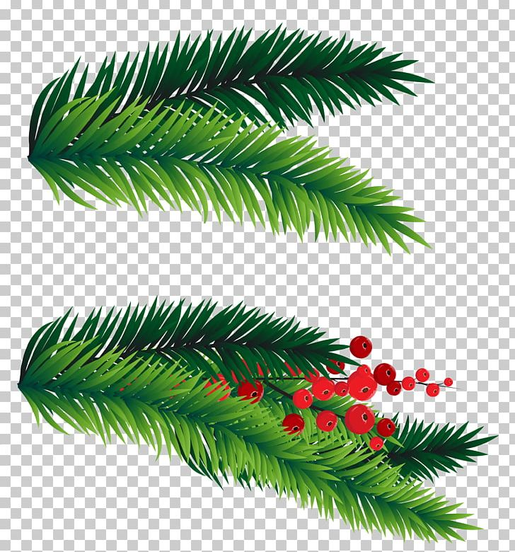 Fir Christmas Tree PNG, Clipart, Branch, Branches, Christmas.