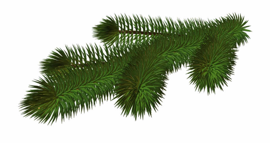 Christmas Tree Branch Png.