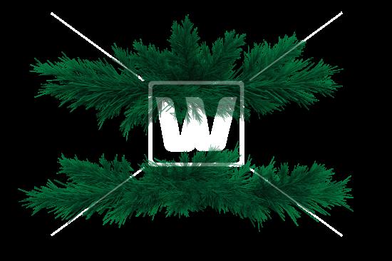 Fir Branches PNG.