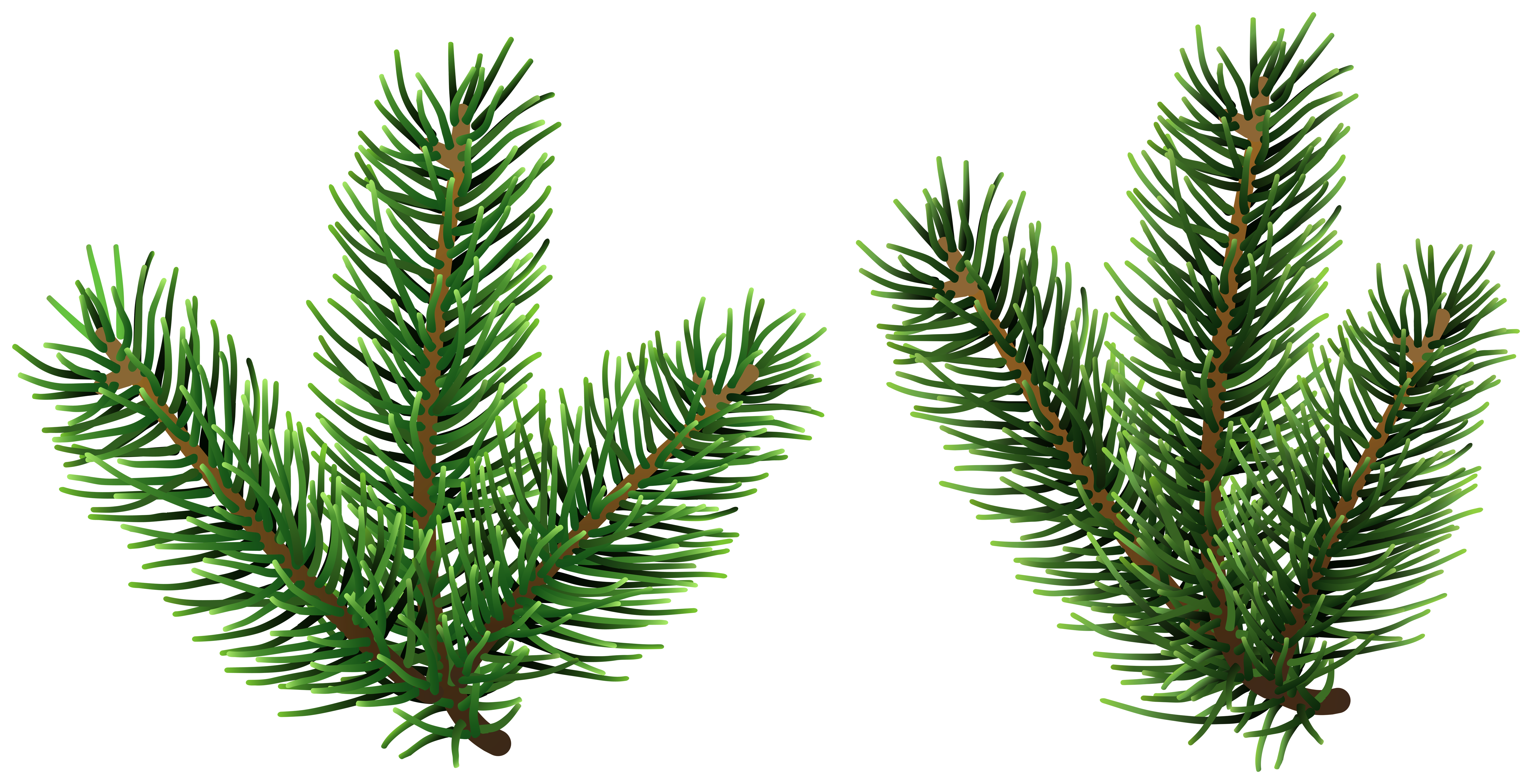 Pine Tree Branches PNG Clip Art.