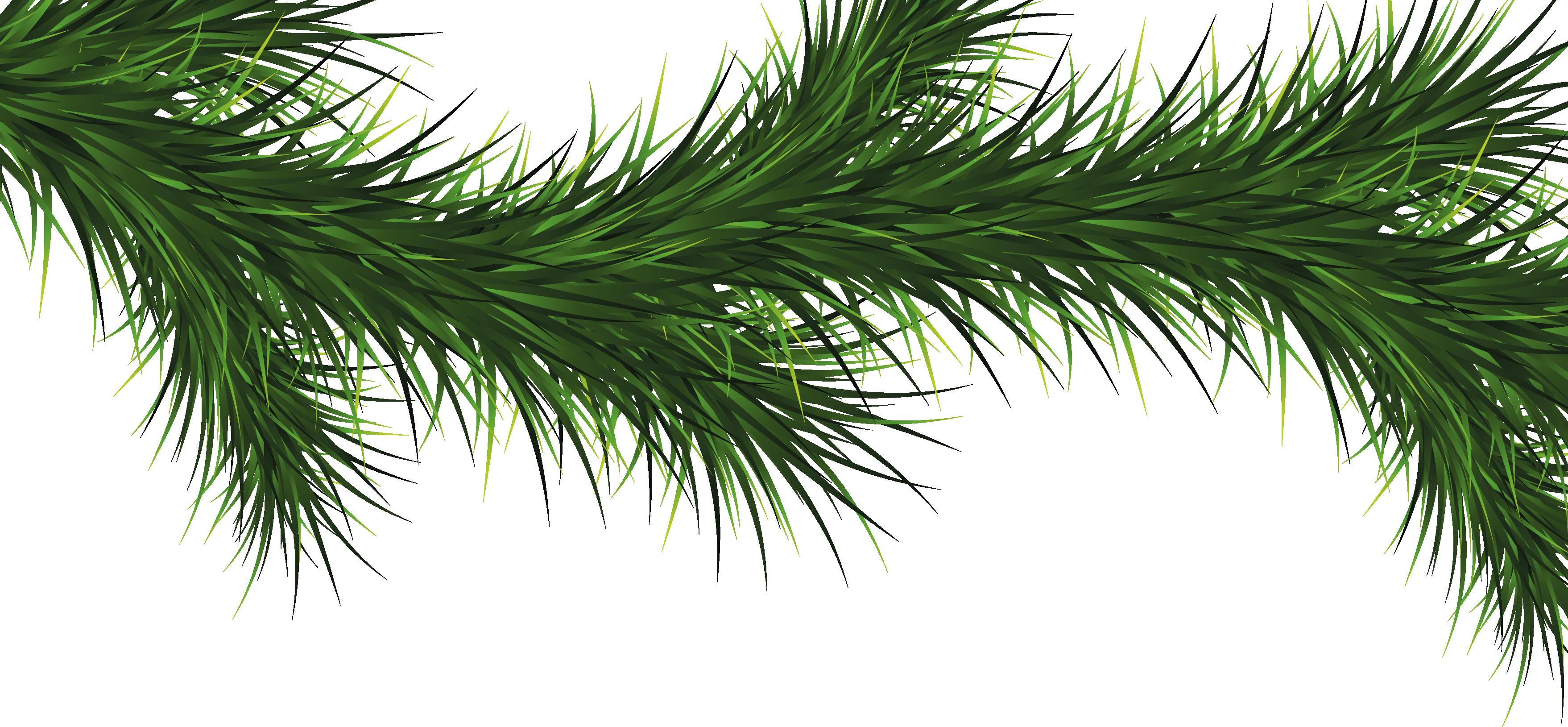HD Christmas Tree Clipart Limb.