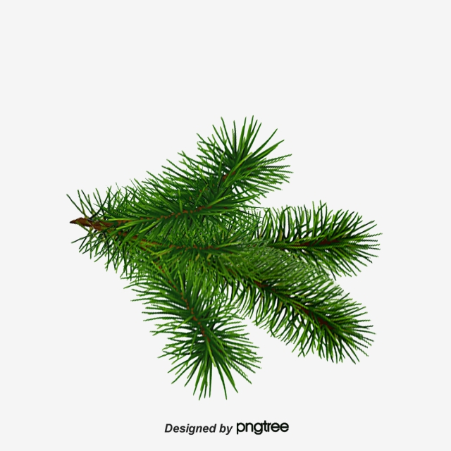 Christmas Tree Branches Pattern, Tree Clipart, Christmas Tree, Green.