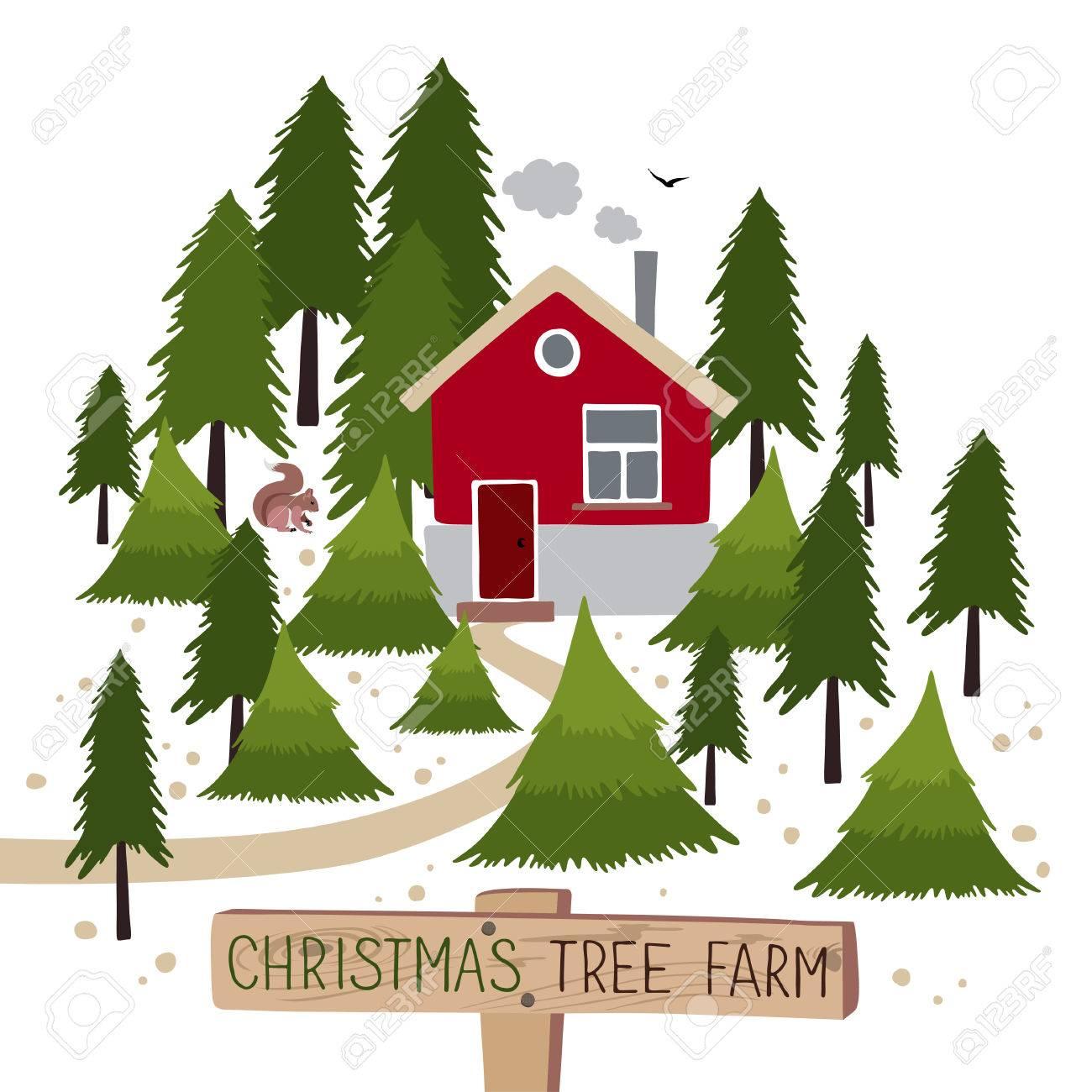 Christmas tree farm. Christmas Trees for sale.