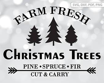 Fresh cut tree.