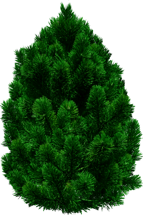 Green Christmas Tree Png.