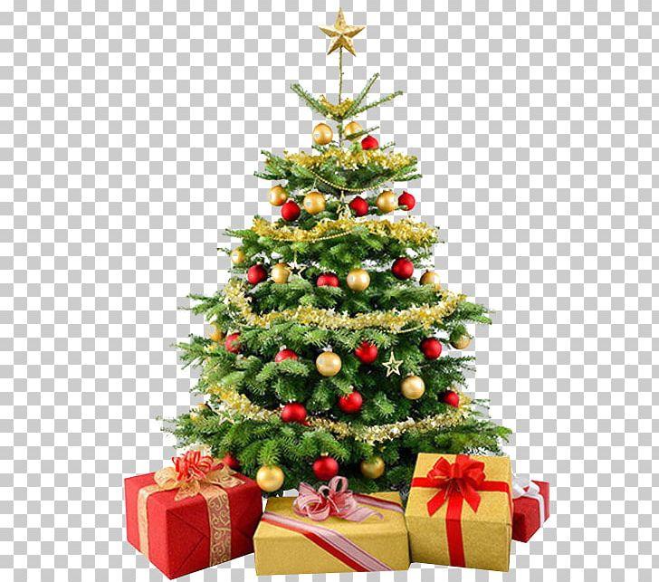 Stock Photography Christmas Tree PNG, Clipart, Christmas, Christmas.
