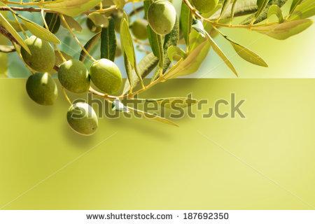 Olive Border Designfood Background Stock Foto 84462370.