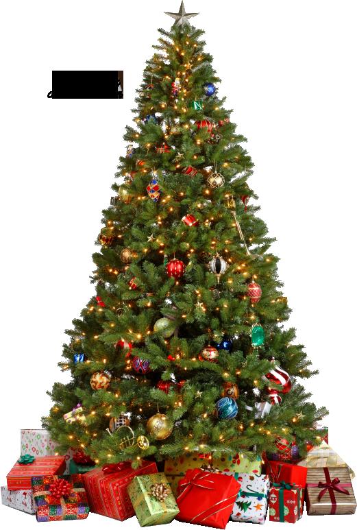 Christmas Tree Transparent Background.