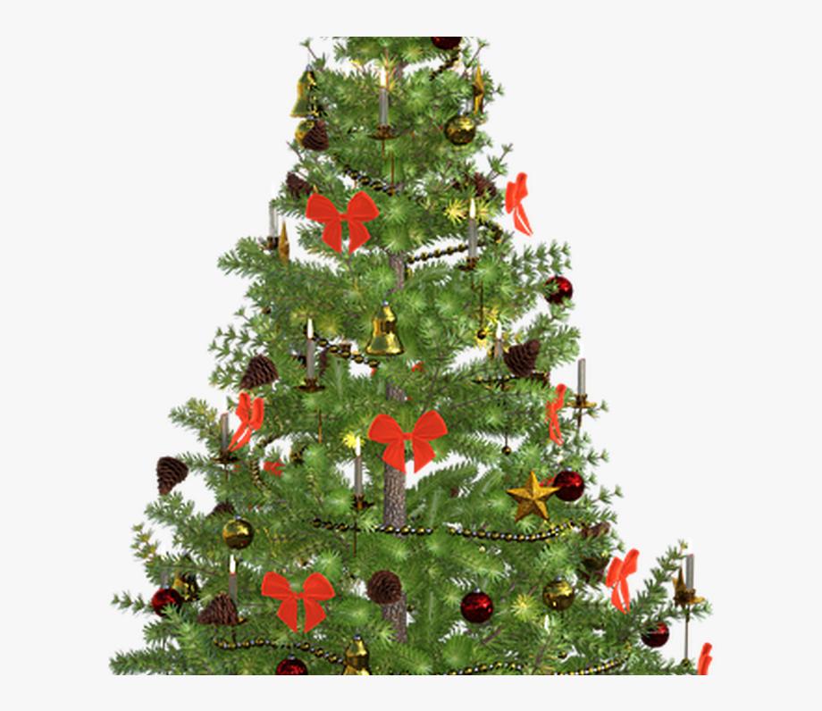 Fir Tree Christmas Lights Free Image On Pixabay.