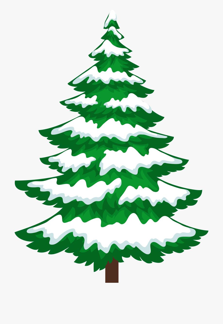 Pine Tree With Snow Transparent Clip Artu200b Gallery.