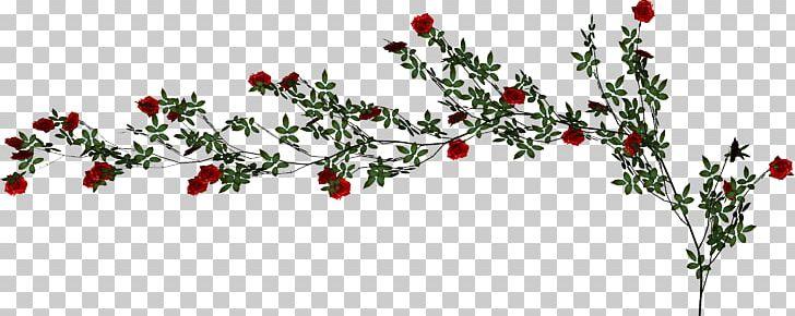 Beach Rose Vine PNG, Clipart, Adobe Illustrator, Branch.