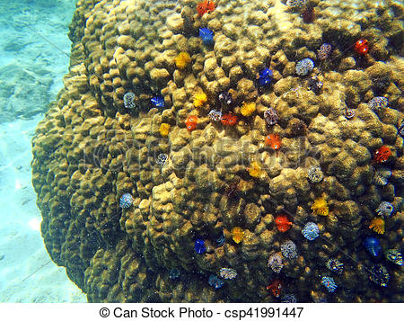 Stock Photo of christmas tree worm at the underwater coral reef of.