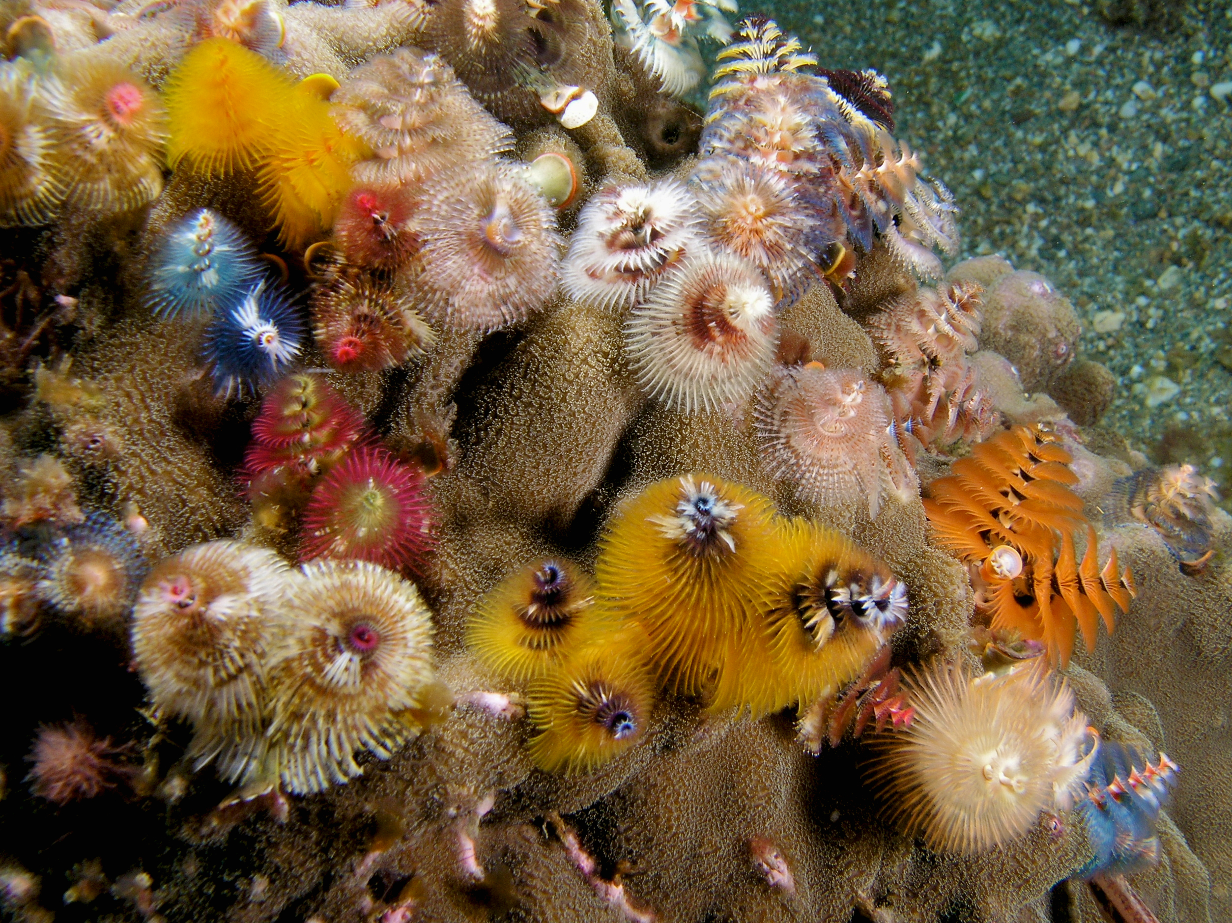 Christmas tree worms clipart.
