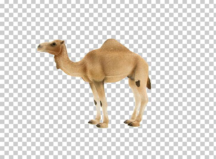 Dromedary Bactrian Camel Mare Christy\'s Toy Outlet Hybrid.