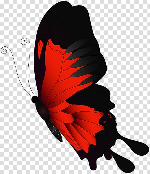 Butterfly Chroma key Flight , red butterfly transparent.