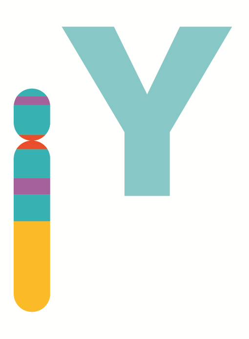 File:Human chromosome Y from Gene Gateway.