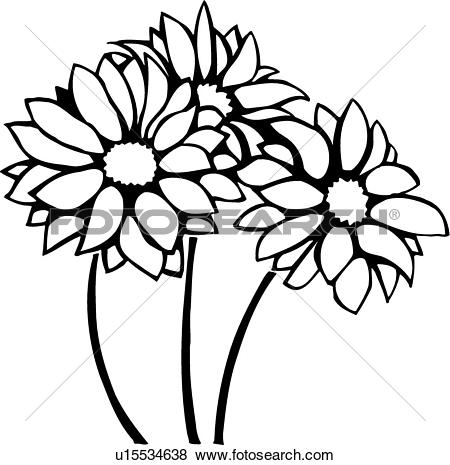 Clipart of Chrysanthemum u11150961.