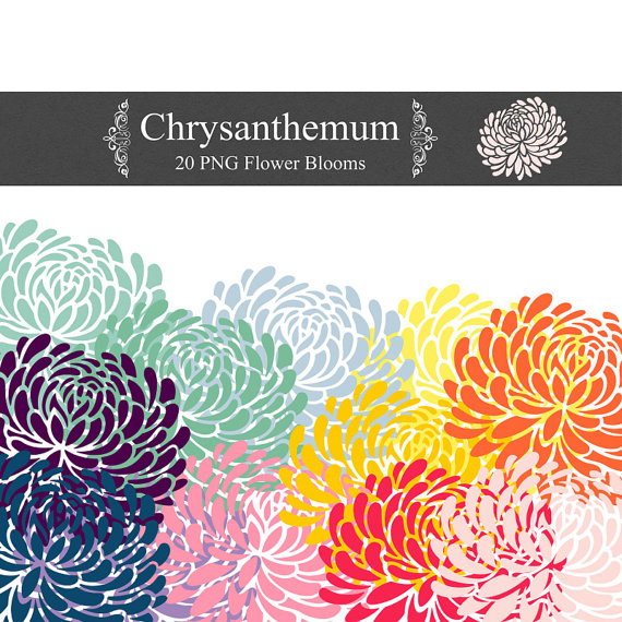 PNG Chrysanthemum Clip Art 300 dpi png floral clipart for invites.