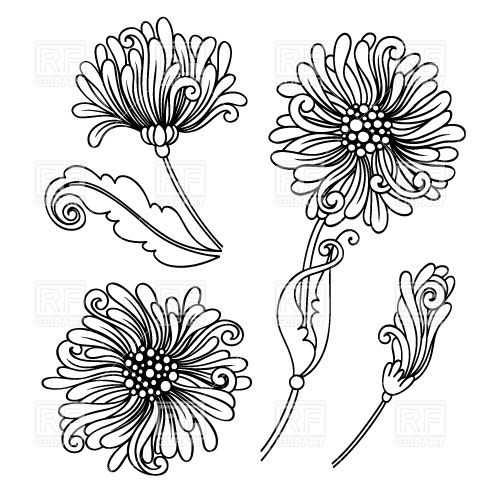 Outlines of buds of a chrysanthemum Vector Image #30056.