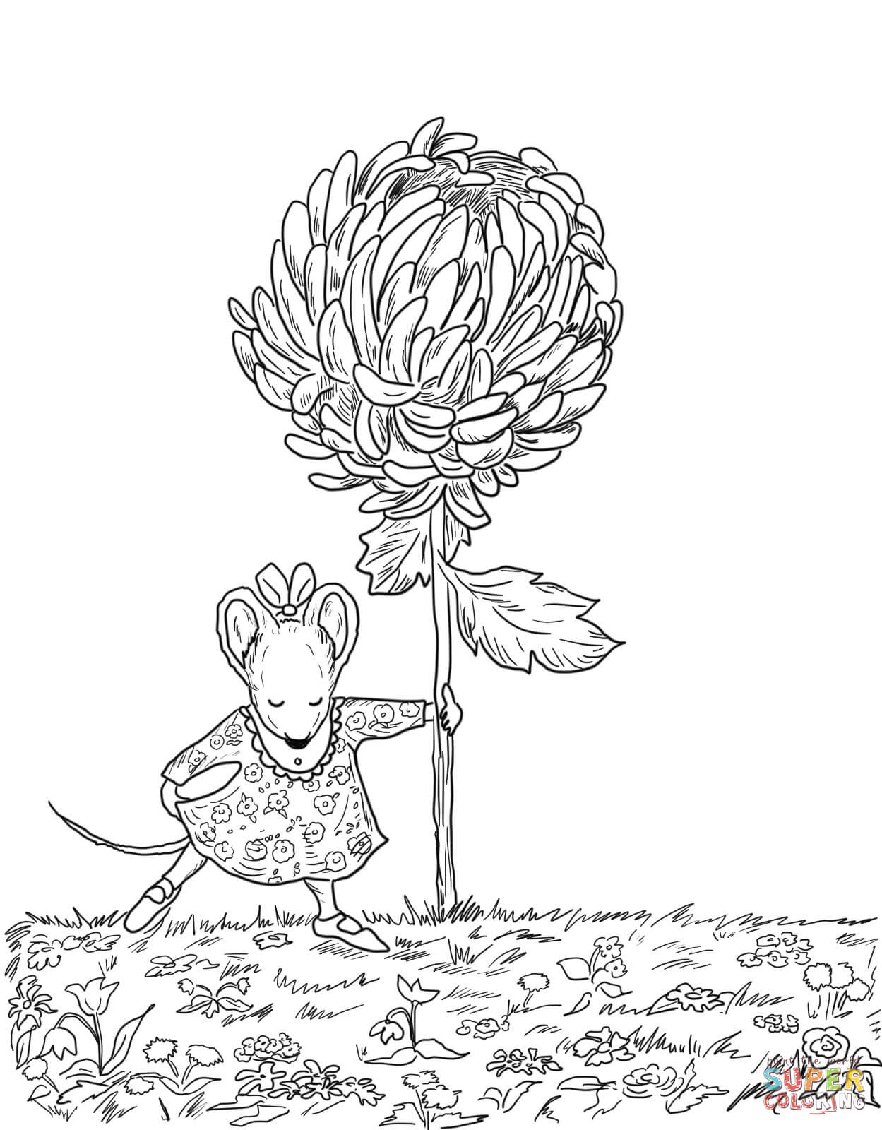 Chrysanthemum coloring pages.