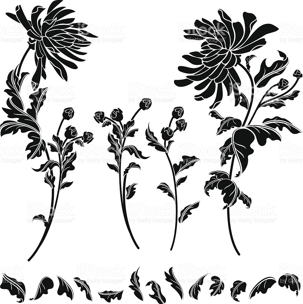 Chrysanthemum Flower Clip Art, Vector Images & Illustrations.