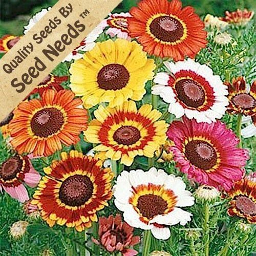 Chrysanthemums, Daisies and Seeds on Pinterest.