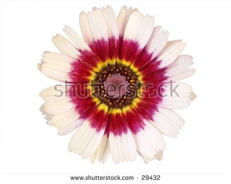 Symmetry Flower Stock Photos, Royalty.